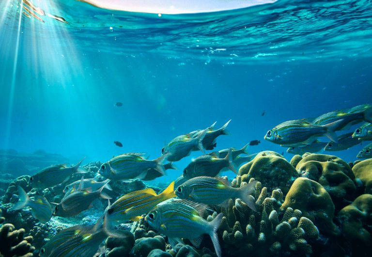 El enorme problema que se nos viene por la pérdida de oxígeno en los océanos