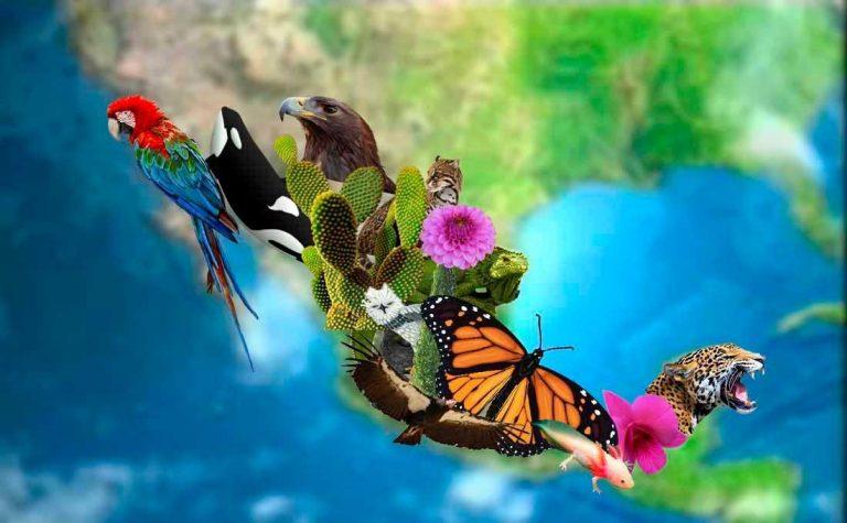 El Convenio de la ONU sobre la Diversidad Biológica propone la protección de al menos un 30% del planeta para 2030