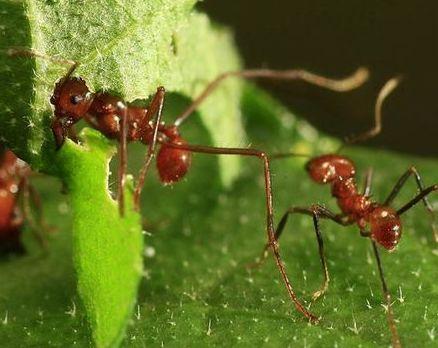 Lee más sobre el artículo Los insectos están desapareciendo y su extinción amenaza con destruir el medioambiente