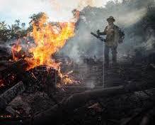 Día Internacional de los BOSQUES: Menos bosques, más enfermedades de transmisión animal