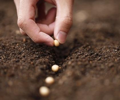 Renta básica, medio rural y soberanía alimentaria