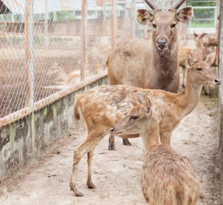 Disparar a animales criados en granjas: el negocio de la caza en España