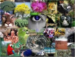 Economía para salvar la biodiversidad