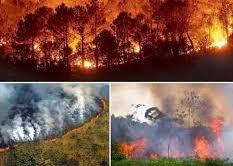 La selva amazónica pierde 70 millones de hectáreas en 30 años