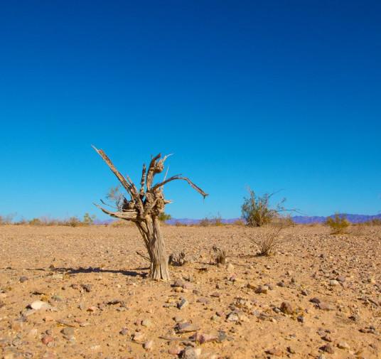 Falta valentía para lograr un planeta sostenible