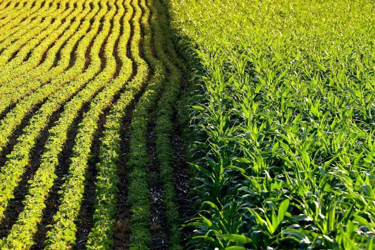 Los cambios en el uso de la tierra aumentan el riesgo de enfermedades transmitidas por animales