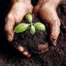 Lee más sobre el artículo LOS CINCO ELEMENTOS (III)  Tierra
