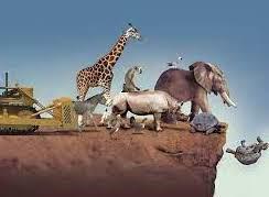 El 'informe Stern' de la biodiversidad: la destrucción de la naturaleza ya supone un enorme riesgo para la economía