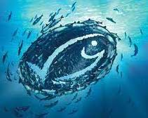 Lee más sobre el artículo La pesca sostenible, del marco internacional a las manos del pescador