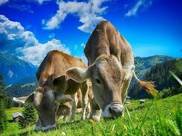 Lee más sobre el artículo Menos carne sí, pero de mejor calidad