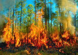 """Lee más sobre el artículo El aire me da ganas de vomitar"""": el impacto en la salud del humo de los megaincendios"""