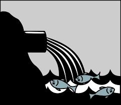 Lee más sobre el artículo Las medidas que propone la ciencia para salvar el Mar Menor y de quién es la responsabilidad política de aplicarlas